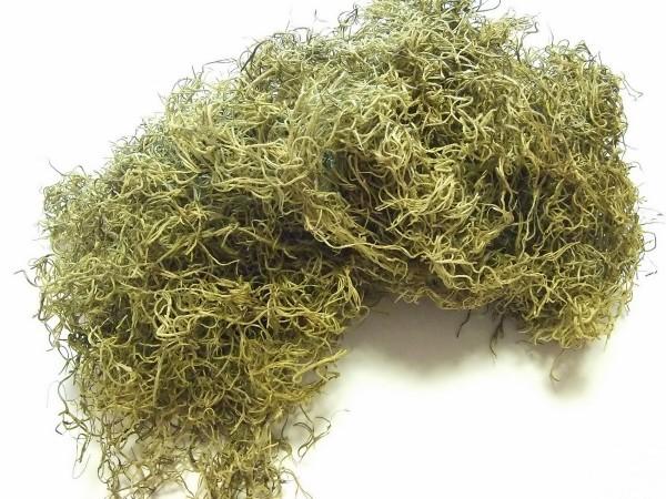 Dchungelmoos Tillandsia grün