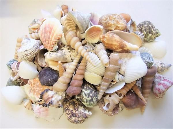 Muschelmix medium 1kg