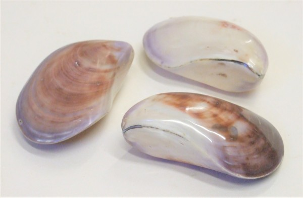 Austern doppelt