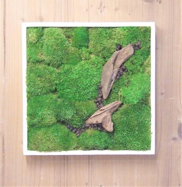 Kugelmoos Moosbild konserviert