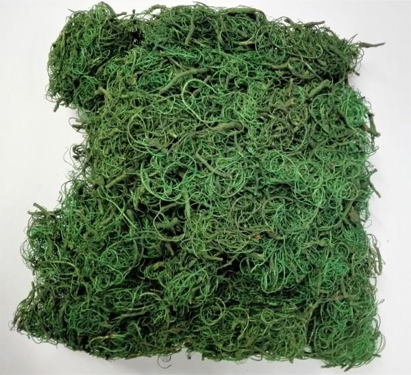 Curly moos dark green