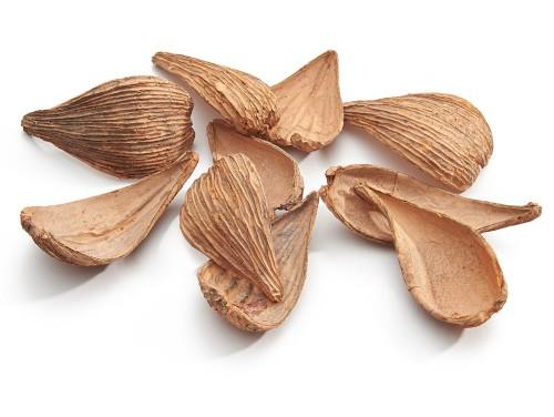 Artipods getrocknete Blätter